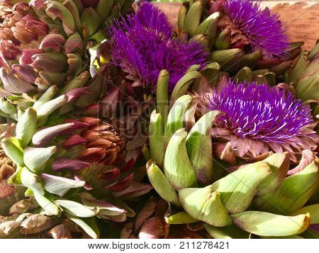 Stall with harvested blooming artichokes on market in autumn