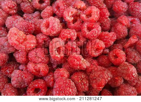 Raspberry fruit background. Fresh raspberries background closeup photo