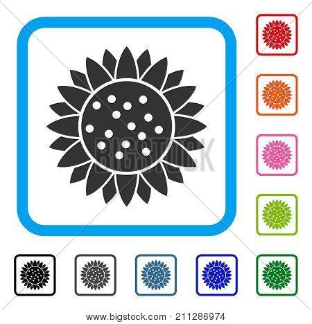 Sunflower Flower icon. Flat gray iconic symbol inside a blue rounded rectangular frame. Black, gray, green, blue, red, orange color versions of Sunflower Flower vector.