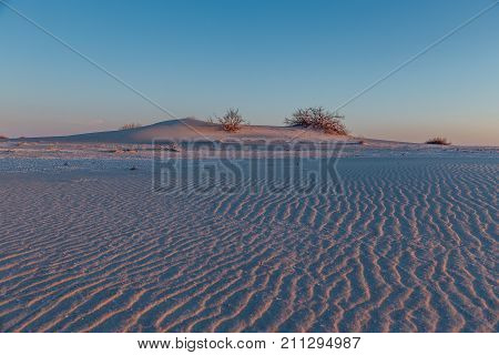 Colorful evening in the desert. Landscape with dunes and dwarf trees illuminated by evening sunlight.