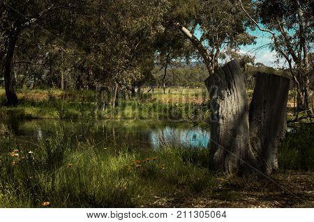 old dead tree trunk beside water in country