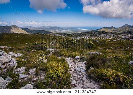 Hiking trail leads through iconic fynbos bushland towards the ocean, far on the horizon.