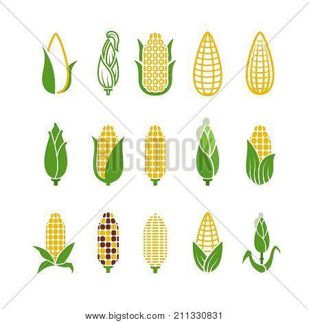 Organic corn vector icons isolated on white background. Corn and corncob vegetable organic illustration