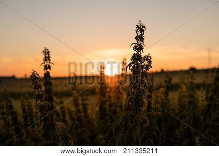 Scenic Landscape During Sunset