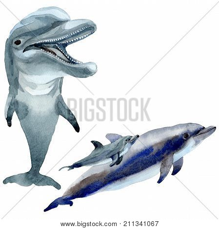 Dolphin wild mammals in a watercolor style isolated. Full name of the mammals: Dolphin. Aquarelle wild mammals for background