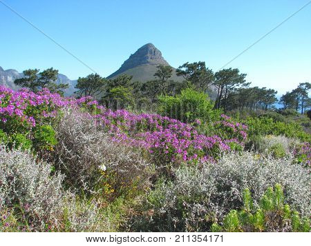 LANDSCAPE, A COLORFUL FORE GROUND WITH DIFFERENT KINDS OF BUSHES AND TREES, WITH MOUNTAINS IN THE BACK GROUND