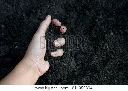 Soil Texture. Soil In Hand, Palm, Cultivated Dirt, Earth, Ground, Brown Land Background. Organic Gar