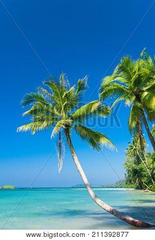 Palm Panorama Green Getaway