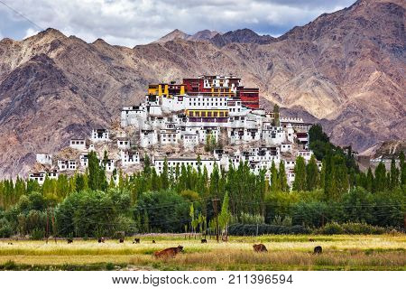 Thikse Gompa or Thikse Monastery (also transliterated from Ladakhi as Tikse, Tiksey or Thiksey) - Tibetan Buddhist monastery of the Yellow Hat (Gelugpa) sect. Ladakh, Jammu and Kashmir, India