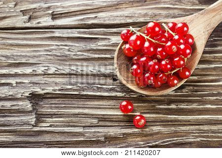 Fresh harvested redcurrant in wooden spoon on rustic wooden table background selective focus copy space.