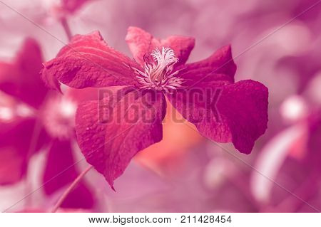 Bright burgundy flower. Artistic image with a soft and selective focus