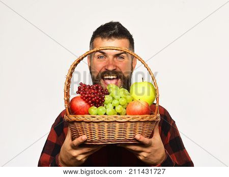 Farmer With Cheerful Face Presents Apples, Grapes And Cranberries.