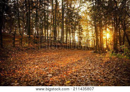 Autumn scene in Tuhinj valley in Slovenia