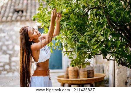 Asian woman harvesting green limes from organically grown lime tree in rural mediterranean setting. Pure natural healthy vitamin.