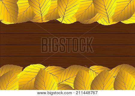 Autumn - beech leaves - vector background , Autumnal leaf of beech , (Fagus sylvatica)