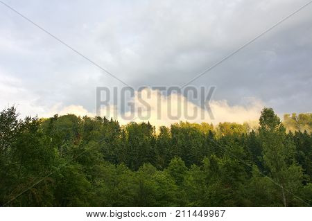 Fog In The Mountains. Forest. Green Mountain Forest Landscape. Misty Mountain Forest. Fantastic Fore