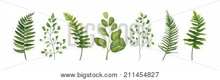 Vector designer elements set collection of green forest fern frond maidenhair greenery art foliage natural leaves herb in watercolor style collection. Decorative beauty elegant illustration for design