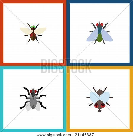 Flat Icon Buzz Set Of Fly, Bluebottle, Gnat And Other Vector Objects poster