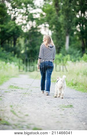 Dog fox terrier following his owner along the pathway, back view