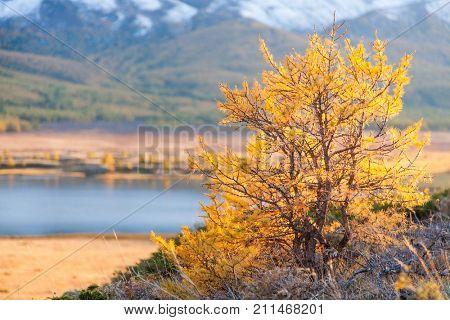 Yellowed Shrub in Autumn with Mountains and a Lake in the Background