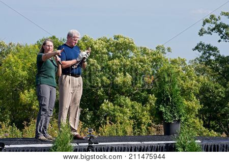 HASTINGS, MN/USA - SEPTEMBER 23, 2017: Volunteer gets instructions before releasing rehabilitated raptor at Carpenter St. Croix Valley Nature Center during raptor release event in Hastings, Minnesota.