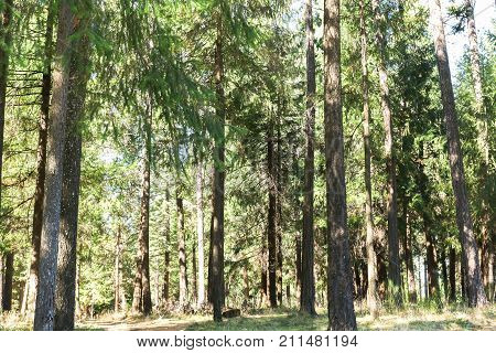 Beautiful Views of Bright Green Trees in the Forest