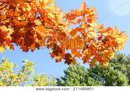 Close up View of Fall Colorful Leaves With Some Blue Sky in the Background