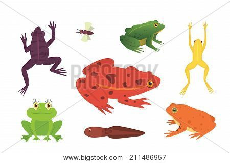 PrintExotic amphibian set. Frogs in different styles Cartoon Vector Illustration isolated. tropical animals.