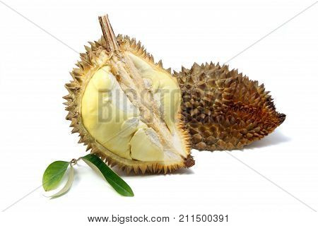 Yellow flesh of Durian and Durian leaf isolated on white background king of fruits in southeast Asia. The durian is distinctive for its large size strong odour and formidable thorn-covered rind.