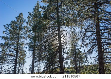 Pine Tree Shadows In Mountains