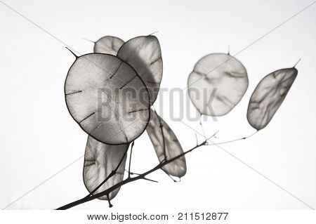 Unusual leaves with a tip in backlight. Texture of leaves isolated on white background. ecological style natural materials. branch with leaves