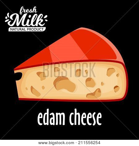 cut piece of cheese edam vector isolated on black background. Edam cheese vector icon