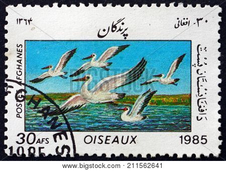 AFGHANISTAN - CIRCA 1985: a stamp printed in Afghanistan shows great white pelican pelecanus onocrotalus bird circa 1985