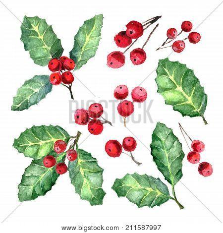 European Holly or Ilex aquifolium leaves and fruit. Xmas Mistletoe. Watercolor illustration. Christmas collection with winter decorative plants isolated on white background. Sprigs with red berries.