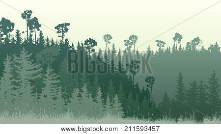 Horizontal illustration of green coniferous forest hills with grass at dusk.
