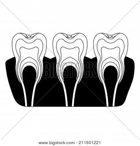 teeth with nerve and tooth root view in black silhouette vector illustration