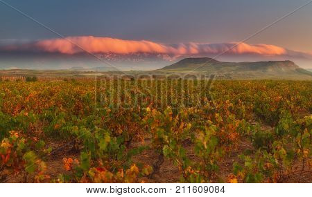 Vineyard in autumn in Najera La Rioja