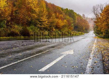Wet Asphalt Road Through Forest In Deep Autumn