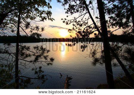 Pine Tree Sunset Silhouette