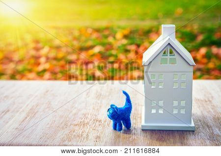 Home concept. toy pet cat near miniature house on green field background. The sun shines on house. Family and home insurance