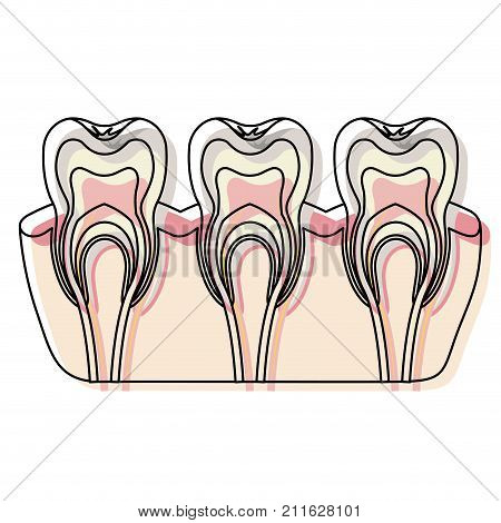 teeth with nerve and tooth root view in watercolor silhouette vector illustration