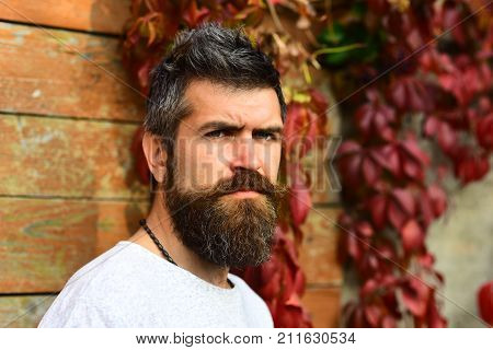 Man With Serious Face On Autumn Ivy Leaves Background