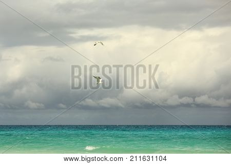 two seagulls fly over a turquoise sea against a backdrop of gloomy sky
