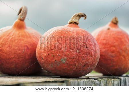 colorful pumpkins in glooming sunlight.Colorful pumpkins in glooming sunlight at high resloution.