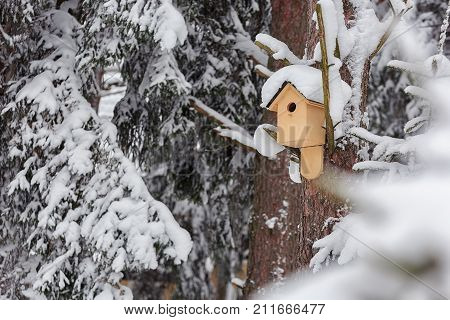 Feeding Trough For Birds In The Winter Forest Thicket.