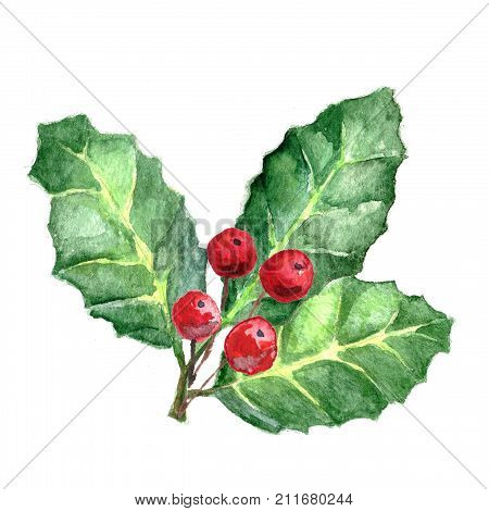 European Holly or Ilex aquifolium leaves and fruit. Xmas Mistletoe. Watercolor Christmas illustration with winter decorative plants isolated on white background. Sprigs with red berries.