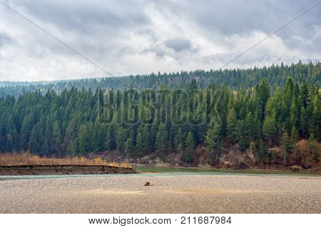 View of the Rocky Moutains and Kicking Horse river from the town of Golden in British Columbia, Canada