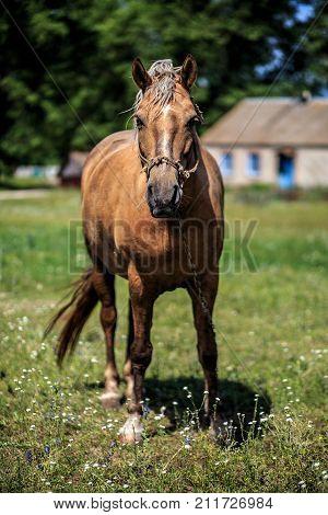 Horse on nature. Horse portrait. Horse outdoor