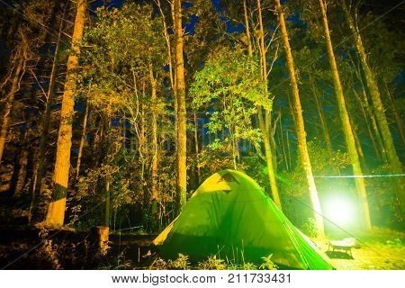 Camping In Pine Tree Forest At Night