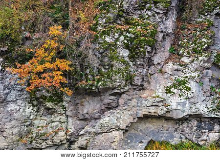 Rocky Cliff With Plants In Autumn
